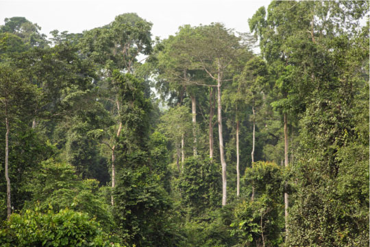 Ghana Conservation Activists Fight Against China-backed Bauxite Mine in Rainforest