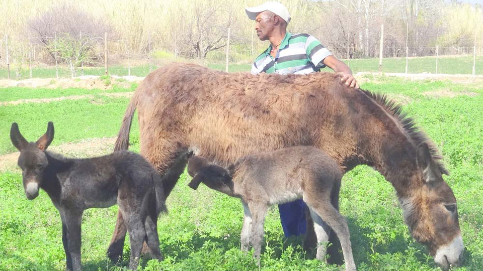 """Donkey Populations in Kenya and Ghana Are on Track to Be """"Devastated"""" Due to Chinese Demand for Hides"""