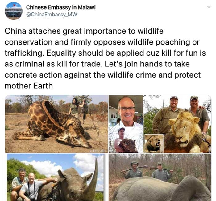 The Chinese Embassy in Malawi Showcases White Hunters in its Appeal to Crackdown on the Illegal Wildlife Trade