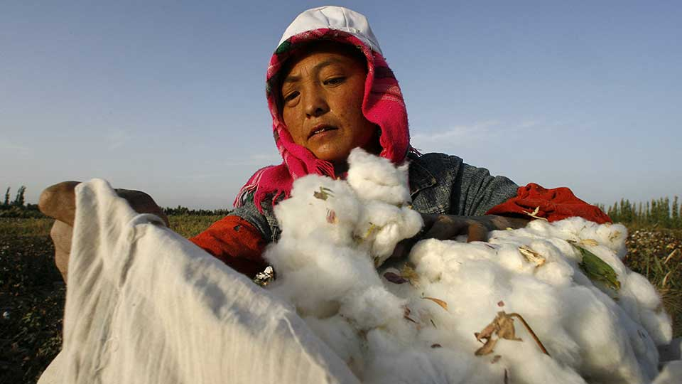 South African Retailers Under Pressure to Ensure Supply Chains Free of Xinjiang Cotton