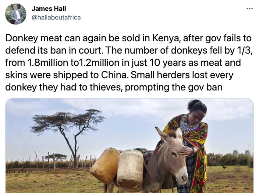 Kenya's High Court Overturns Ban on Donkey Slaughter, Clearing the Way For More Skins to Be Sold to China